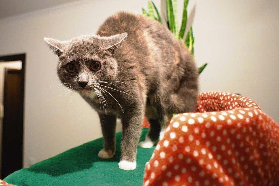 Стресс у кошки – признаки, причины, способы устранения