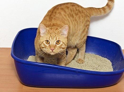 Наполнитель для кошачьего туалета, Зоомагазин Хабаровск, Кошачий наполнитель, Кошачий туалет наполнитель