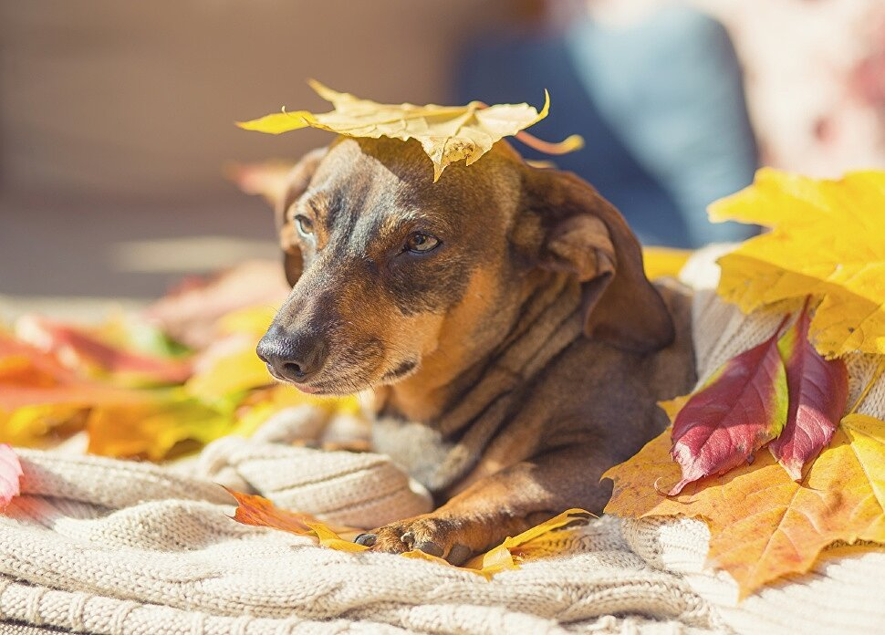 Заботимся о здоровье собаки в осенний период