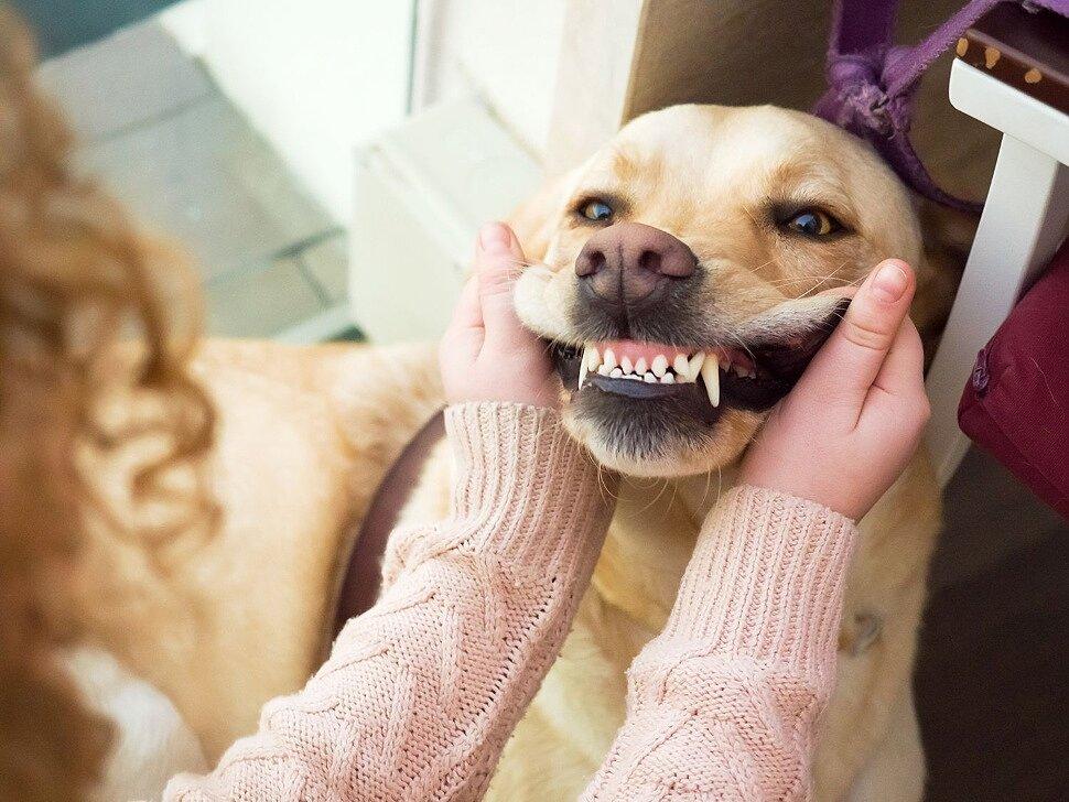 Почему так важен уход за зубами собаки?