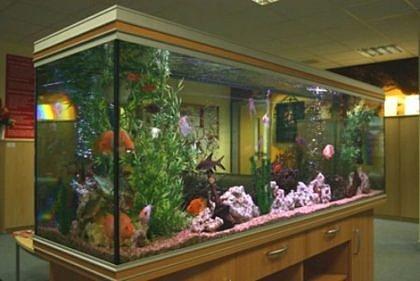 Как правильно обустроить аквариум