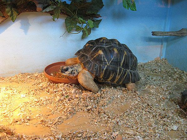 Как грамотно обустроить террариум для сухопутной черепахи
