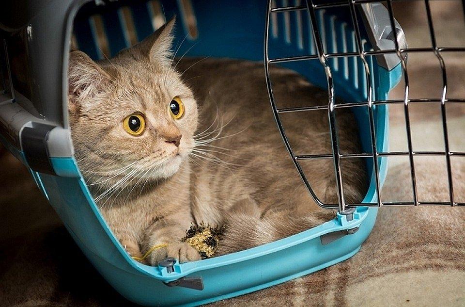 Купить переноску для кошки в зоомагазине Хабаровске