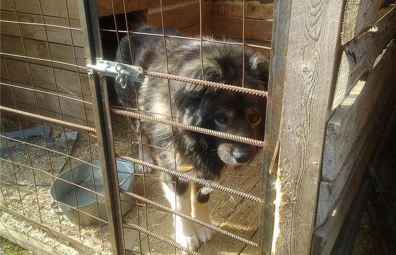 Сухой корм и другие виды для собак живущих в вольере в нашем интернет зоомагазине