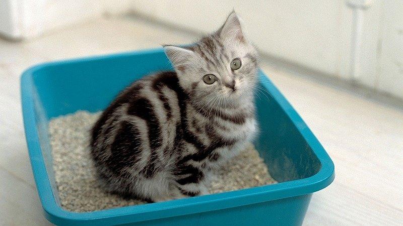 Как приучить котёнка к лотку?