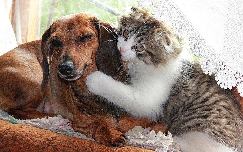 Кошка и собака в одном доме – как подружить животных