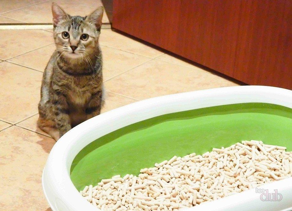 наполнитель для кошачьего туалета интернет зоомагазин хабаровск Зубастик