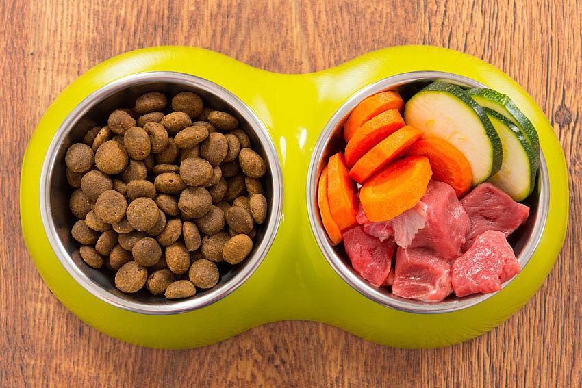 Диетическое питание для собак: виды и особенности