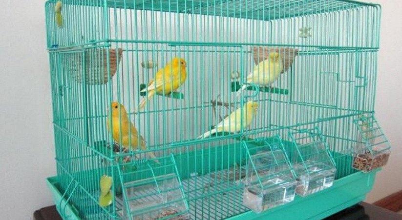 Клетки, аксессуары, оборудование и другие товары для животных в интернет-зоомагазине Хабаровска