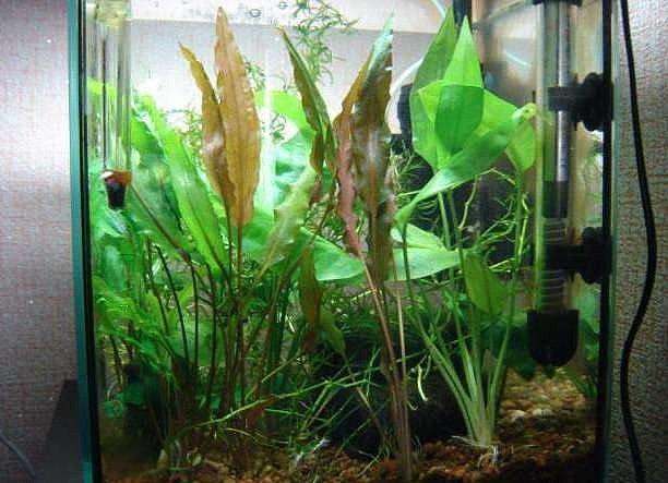 Интернет магазин для животных - всё необходимое для аквариумов и не только