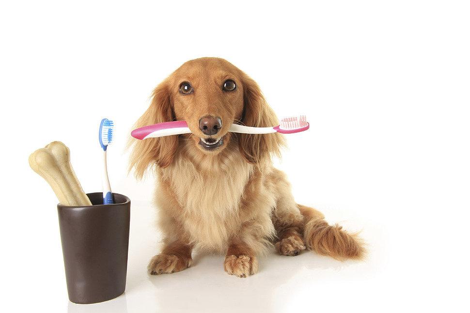 Интернет зоомагазин в Хабаровске: лакомства для собак и многие другие товары для животных