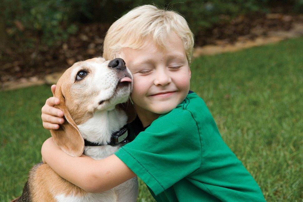 Выбираем домашнее животное для ребёнка – что важно учесть?